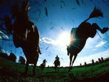 What are the basics of horse racing in the UK?